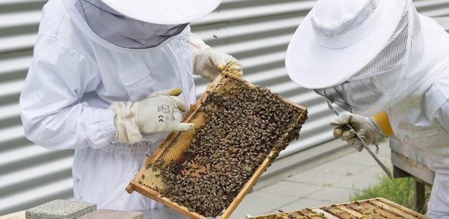 Top 5 Best Beekeeping eBooks for Beginners: 2019 Reviews and Guide