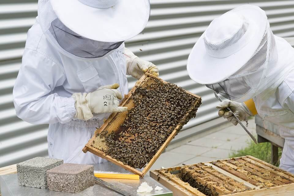 Best Beekeeping eBooks for Beginners