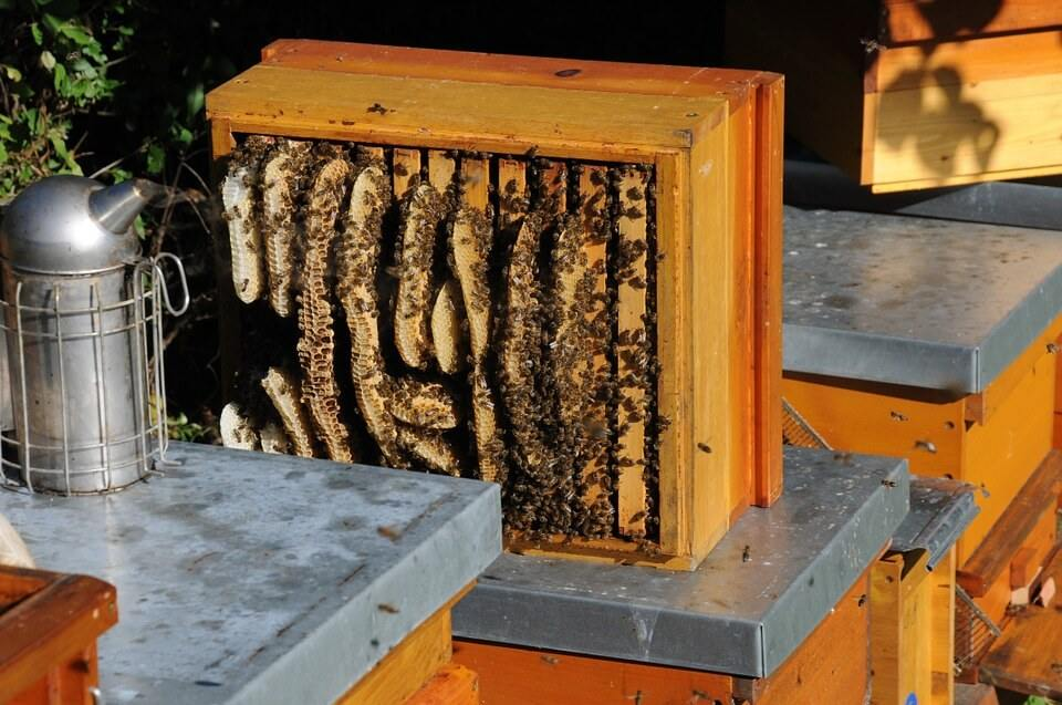 Beekeeping Supplies near Me