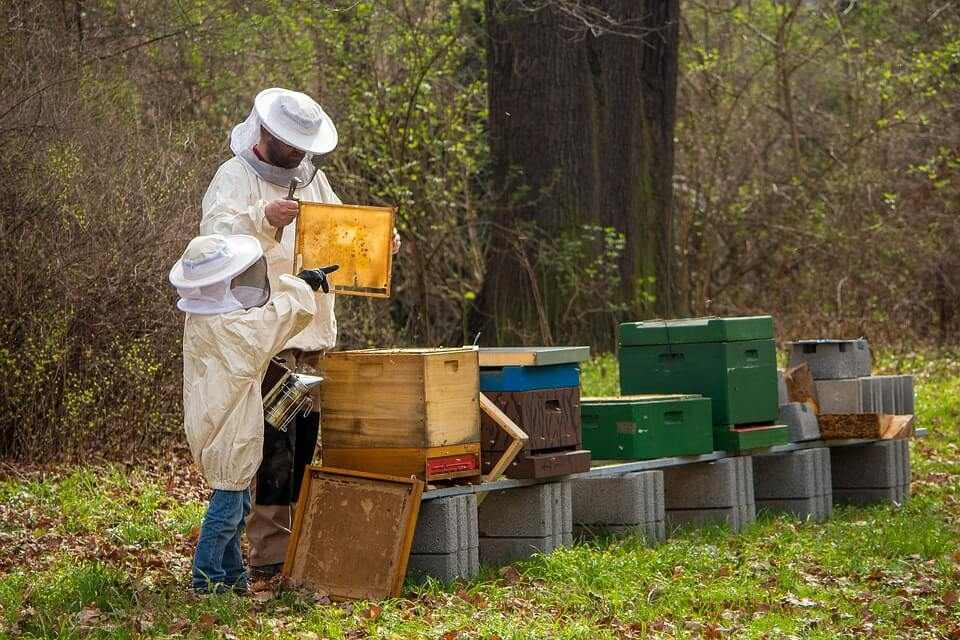 Best Beehive Boxes for Beginners