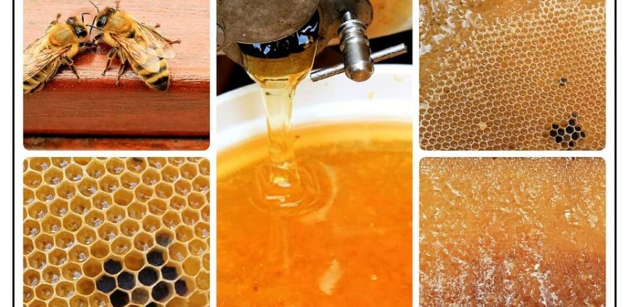 Best Honey Extractor for the Money (Electric & Manual)