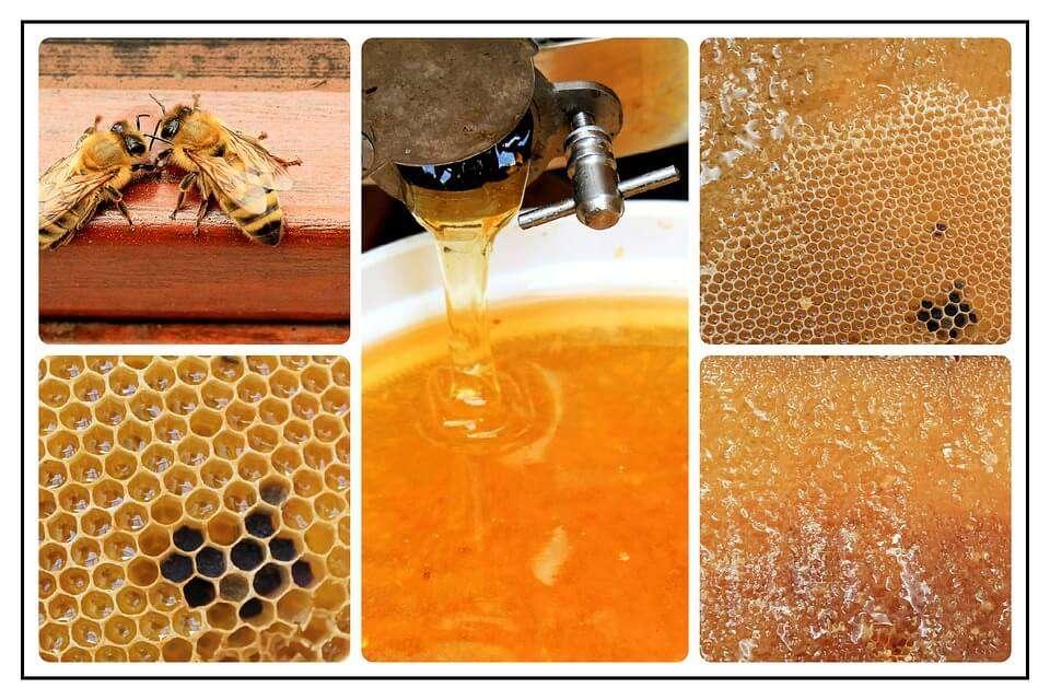 Best Honey Extractor for the Money