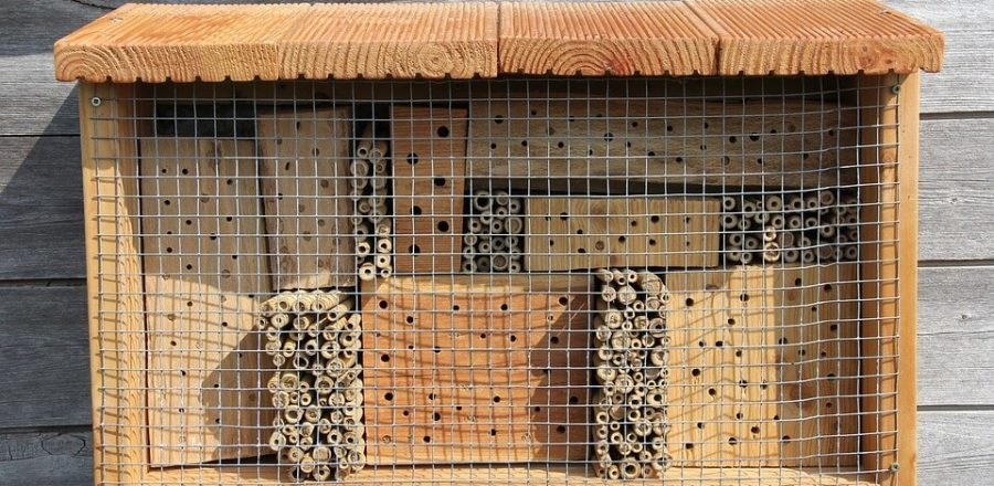 Top 8 Best Mason Bee Houses [2019 Guide]