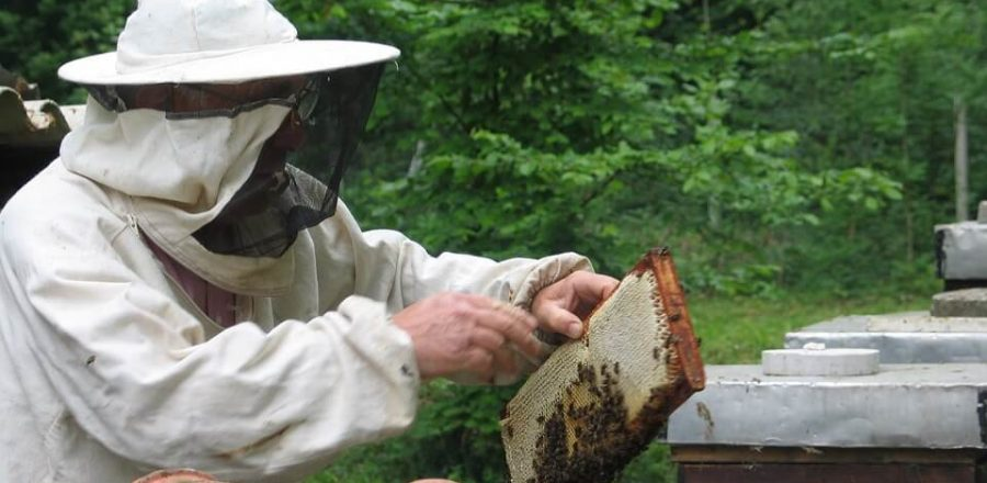 Top 9 Best Beekeeping Starter Kits For Beginners