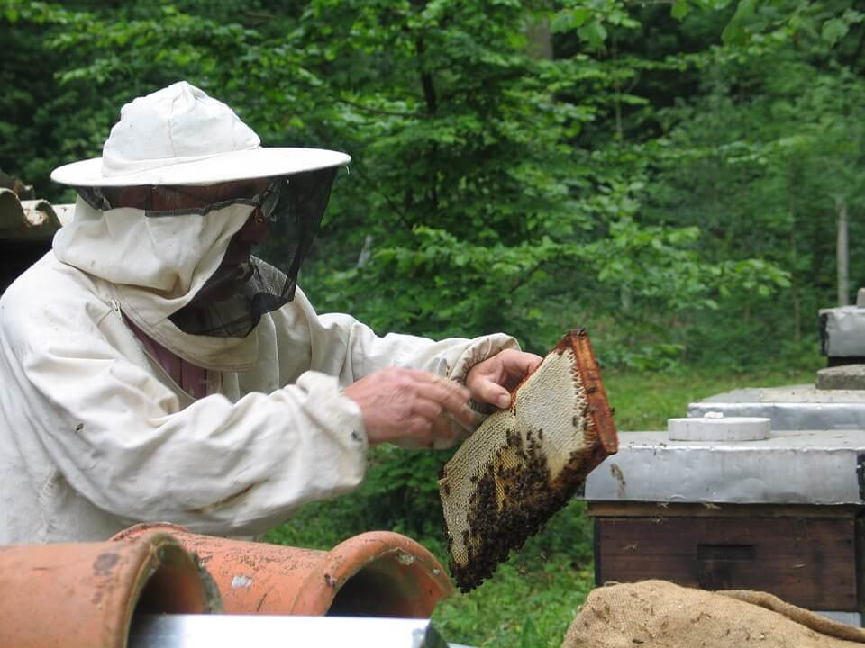 Best Beekeeping Starter Kits
