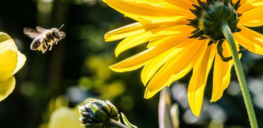 Top 5 Ways To Help Save the Bees [and Save the World]