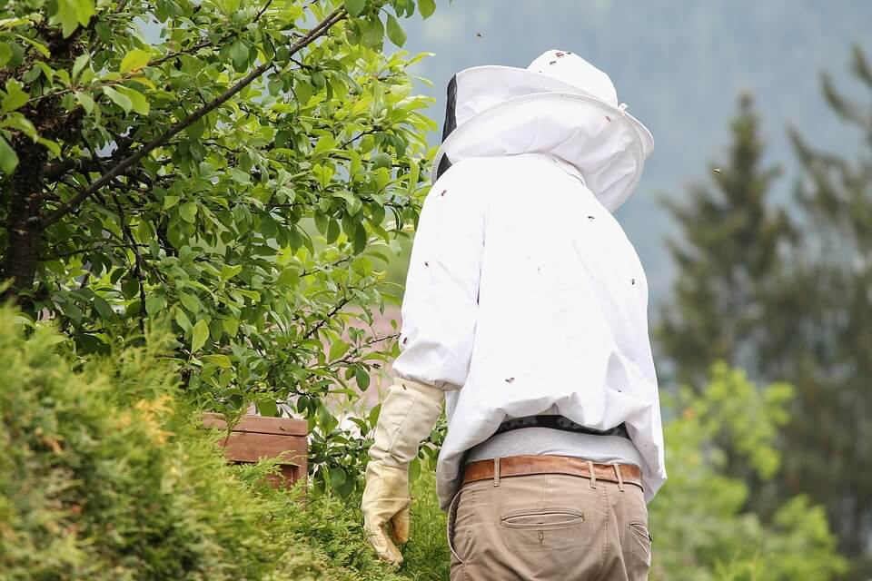 Best Beekeeping Veils and Hats