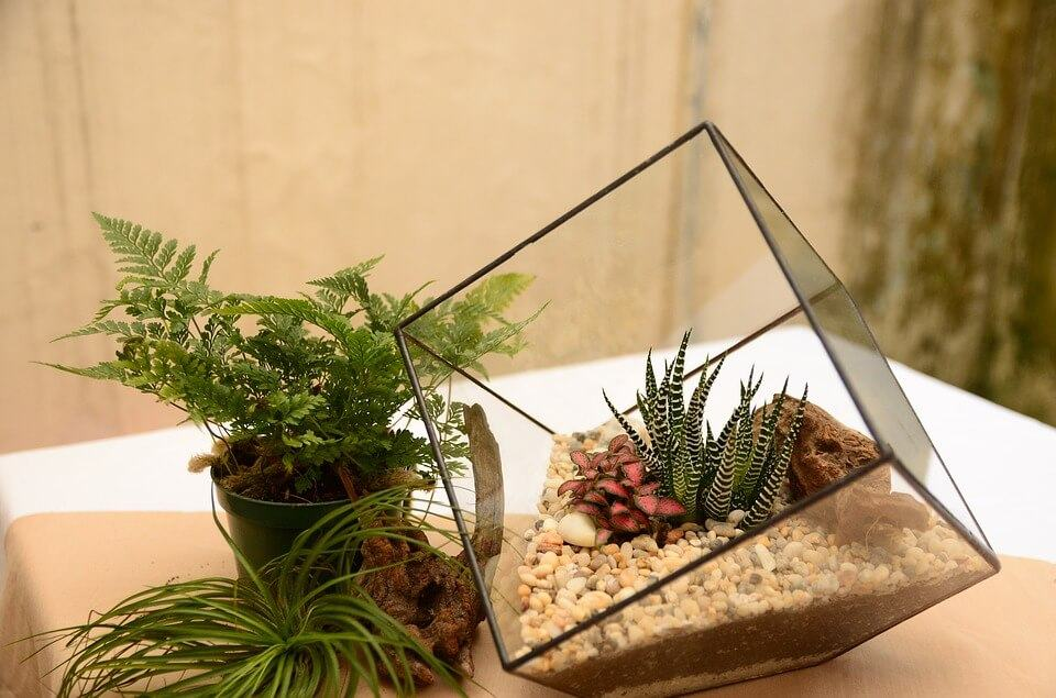 Best Carolina Custom Cages Terrariums