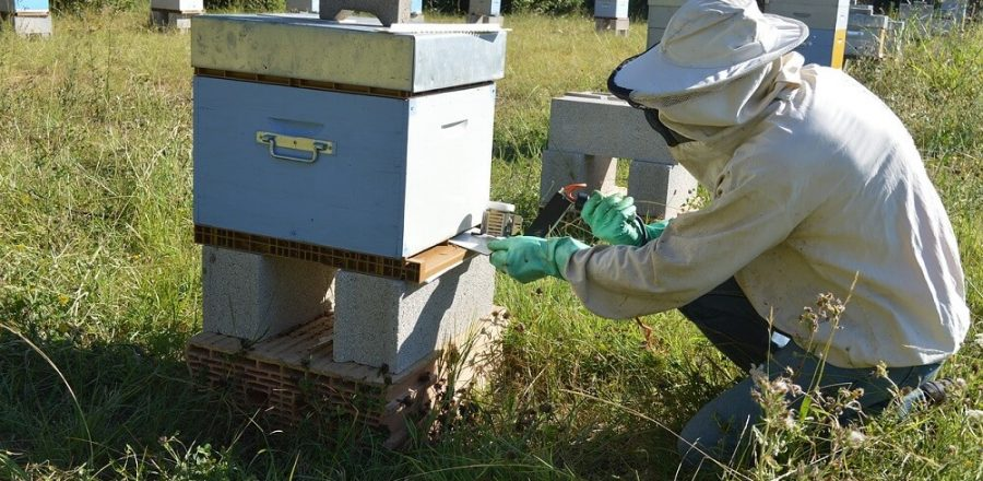 Best Treatment for Varroa Mites in Beehives