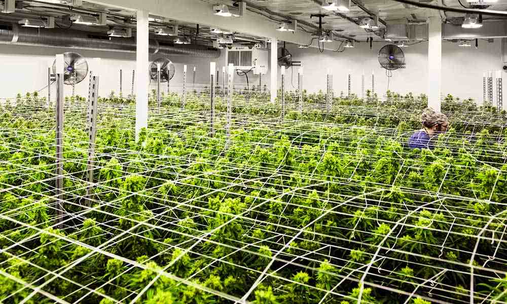 8 Best Inline Fans For Your Grow Room In 2020